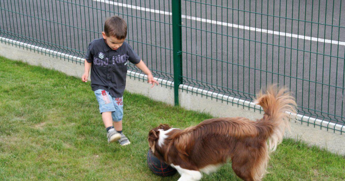 Site de rencontre pour chiens gratuit