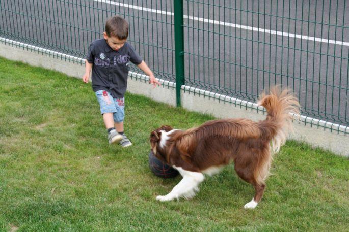 dressage chien illkirch