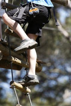 Monter le long des arbres, une activité physique, impressionnante... mais tellement amusante !