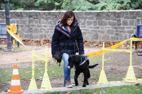Un futur chien guide à l\'entraînement