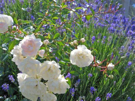 Le mois de mars conditionne l\'avenir de votre jardin