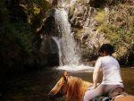 Que ce soit pour une randonnée ou pour une pratique plus sportive, l\'équitation fait des émules en Alsace.