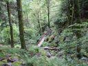 Escapade dans les Vosges : sur le sentier de la Wormsa
