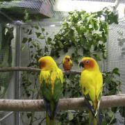 Expo-bourse de perroquets et oiseaux exotiques 2018
