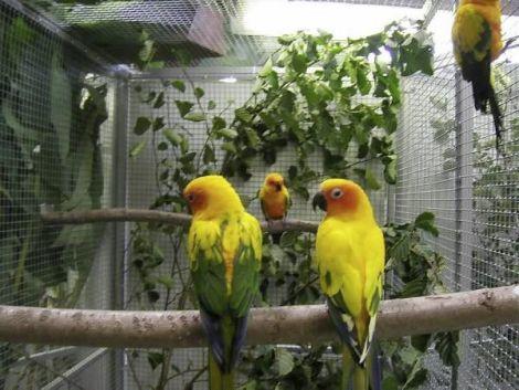 Expo de perroquets et oiseaux exotiques 2016