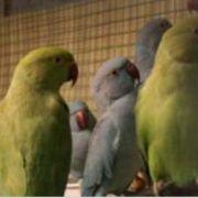 Expo-vente d\'oiseaux exotiques à Blotzheim 2018