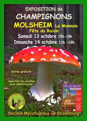 Exposition annuelle de Champignons de la Société Mycologique de Strasbourg 2018