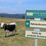 Les fermes auberges en Alsace, dégustez un repas marcaire dans les Vosges !