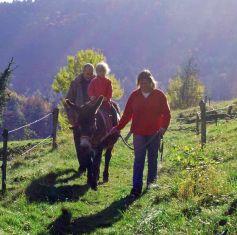 La Ferme Traits'Anes propose des balades à dos d\'âne