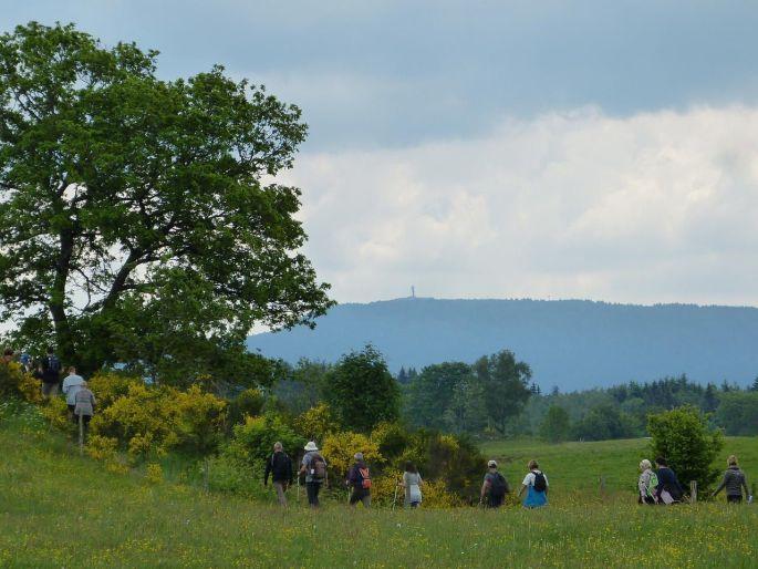 Les randonnées des Festival Mille Pas aux 1000 étangs