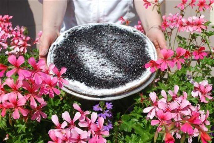 La tarte aux myrtilles sauvages est à l\'honneur!
