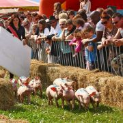 Fête du Cochon à Ungersheim 2021