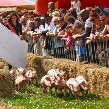 Fête du Cochon à Ungersheim 2019