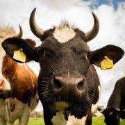 Fête de l\'élevage à Lunéville 2021