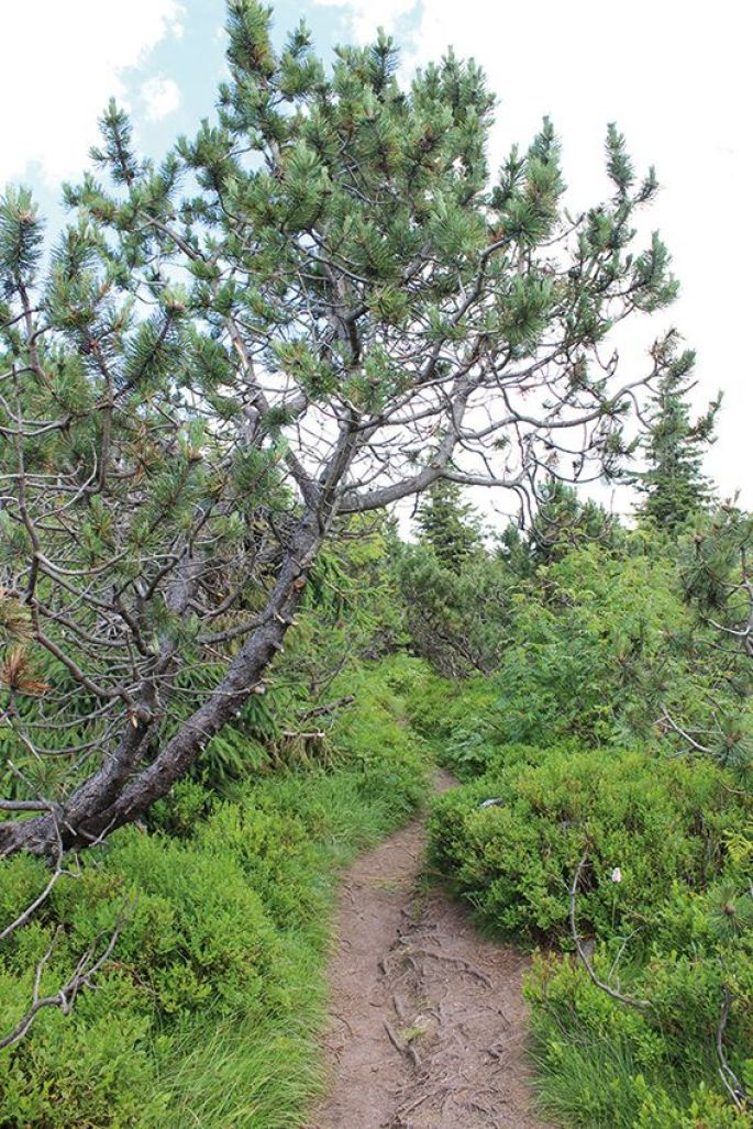 Forêt domaniale des deux lacs