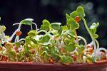 Les jardineries vous proposeront également des graines, pour disposer vos plantations plus facilement