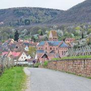 Escapade sur les hauteurs de Gueberschwihr