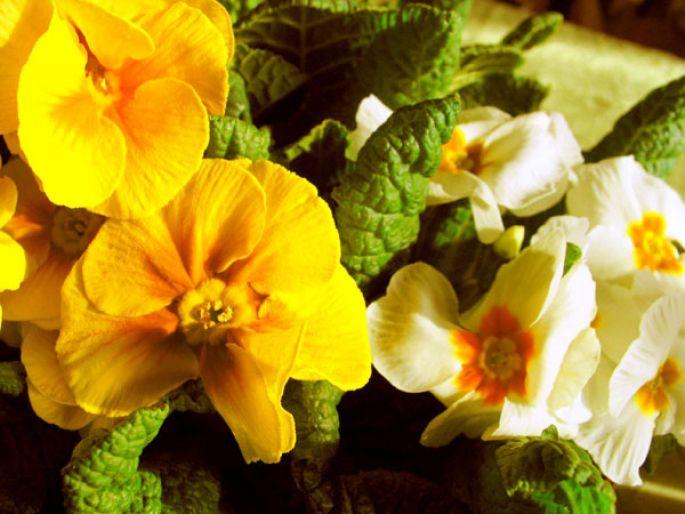 Guide des fleurs et des essences dans le Haut Rhin