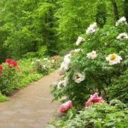 Jardin : Ayez les bons réflexes écologiques !