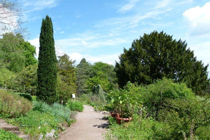 Jardin botanique de saverne parc square et jardin for Jardin veritable