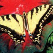 Entrez dans le monde fascinant des papillons ! Jardin des Papillons - Saison 2007