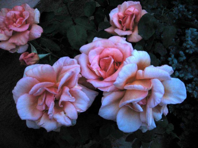 Le Landhaus Ettenbühl est le paradis des roses