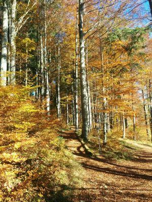 Vive l\'automne!