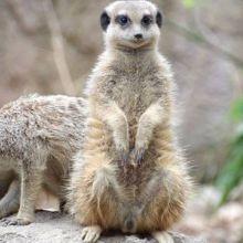 Journée découverte au Zoo de Mulhouse