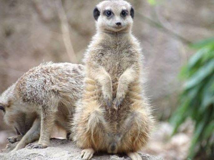 Journée découverte au Zoo de Muhlouse