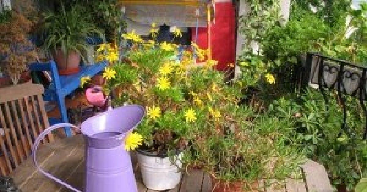 Juin l 39 entretien du jardin mulhouse colmar haut rhin 68 - Jardin terrasse toit mulhouse ...