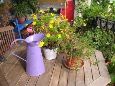 Juin : l\'entretien du jardin et de la terrasse