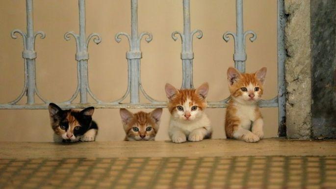 Un documentaire qui suit le quotidien de sept chats à travers les rues d\'Istanbul