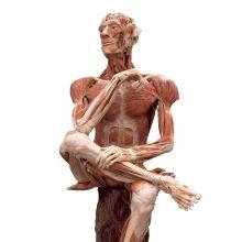 Körperwelten (Body Worlds)