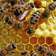 L\'espace apicole de Colroy-la-Roche