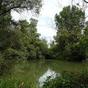 L'Ile de Rhinau