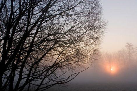 La forêt d'Erstein