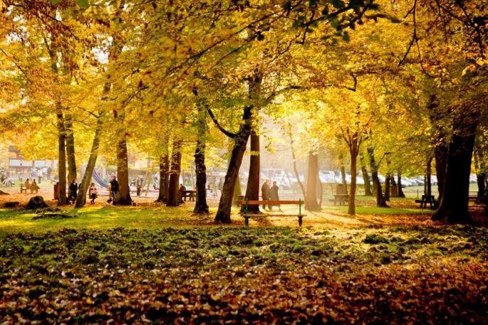 La Forêt de Haguenau, terrain de jeux et de découvertes
