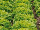 5 légumes simples à cultiver