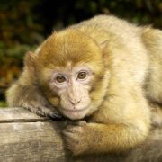 4 idées de sorties pour voir des animaux en Alsace
