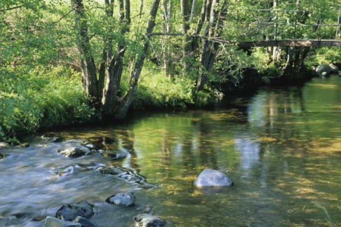 La nature intacte de la réserve de l\'Ill Wald offre un réel moment de détente