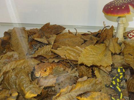 Les animaux et leurs stratégies de camouflage sont visibles au Musée d\'histoire naturelle et d\'ethnographie