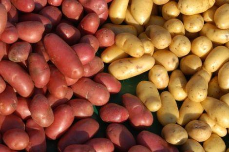 Les différentes variétés de pomme de terre