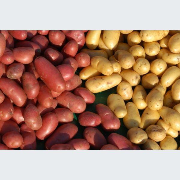 les pommes de terre les diff rentes vari t s leur utilisation et usage. Black Bedroom Furniture Sets. Home Design Ideas
