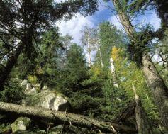La réserve de Frankenthal-Missheimle