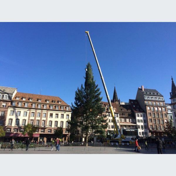 Incroyable ! Le nouveau grand sapin est fissuré, il va falloir le changer — Strasbourg