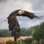 5 parcs où voir les animaux dans leur environnement naturel