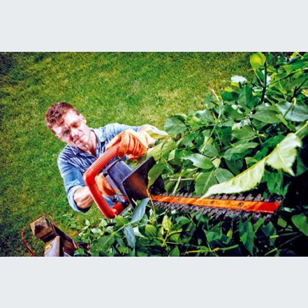 mars dans votre jardin taille des rosiers et entretien des pelouses. Black Bedroom Furniture Sets. Home Design Ideas