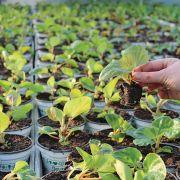 Des plantes peu gourmandes en eau