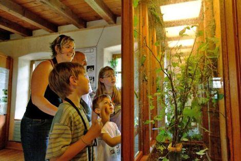 Au Vivarium du Moulin, à Lautenbach-Zell,  les petites bêtes se laissent admirer