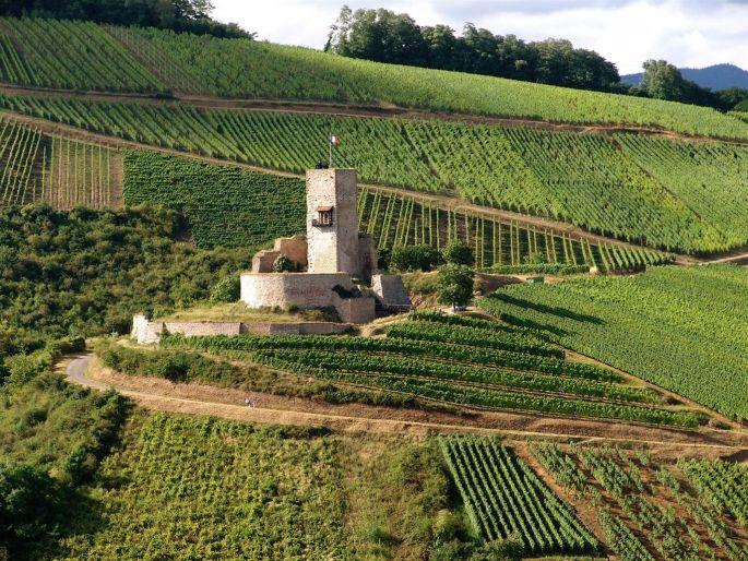 Vue sur le château du Wineck entouré des vignobles
